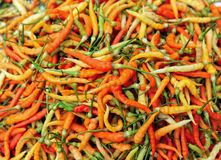 Chili Pepper variety color Stock Photo