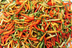 Chili Pepper variety color Royalty Free Stock Images