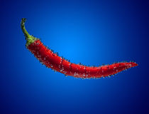 Chili pepper into water on blue Stock Image