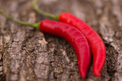 Chili pepper with water drops Stock Photography