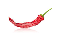 Chili pepper  on white Royalty Free Stock Photography