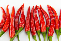 Chili pepper  on a white background. Royalty Free Stock Photography