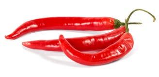 Chili Pepper On White Background encarnado Imagens de Stock Royalty Free