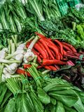 Chili pepper and garlic surrounded by edible greens royalty free stock photo