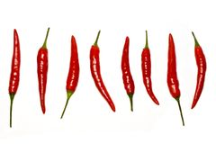 Chili peppers. On a white background Stock Photography