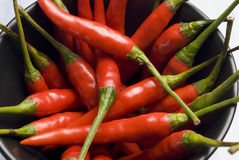 Chili peppers. Royalty Free Stock Photo