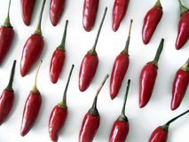 Chili Peppers. Red hot chili peppers aligned in rows over white background Royalty Free Stock Image