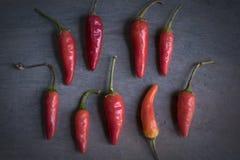 Chili Peppers Fotografering för Bildbyråer