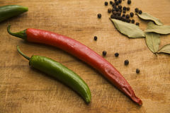 Chili peppers and bay leaves Stock Images