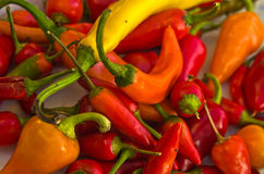 Chili peppers of different colors and flavours Royalty Free Stock Photography