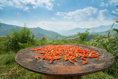 Chili peppers drying in the sun Stock Photos