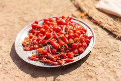 Chili peppers drying in the sun Royalty Free Stock Image