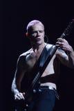 Chili Peppers encarnado - pulga imagens de stock