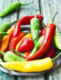 Chili Peppers färgrika kryddiga peppar Royaltyfri Bild