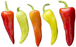 Chili peppers. Five brightly colored banana chili peppers isolated against a white background stock image