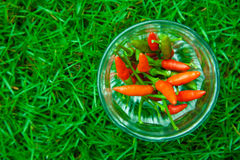 The chili peppers freshest and hottest, On hand and lawn Royalty Free Stock Image