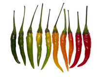Chili peppers gradient Stock Photography