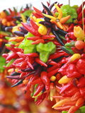 Chili peppers hang bunched. Hot chili peppers hang bunched from a string at a farmer's market royalty free stock images