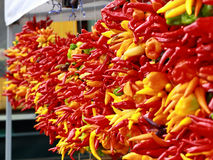 Chili peppers hang in bunches. Royalty Free Stock Photo