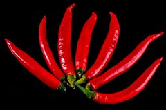 Chili peppers isolated on a black background. Royalty Free Stock Images