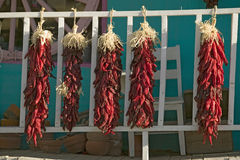 Chili Peppers on Mescalero Apache Indian Reservation near Ruidoso and Alto, New Mexico Stock Photos
