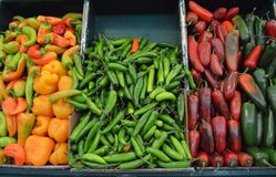Chili peppers at mexican market. Colorful chili peppers at mexican market Royalty Free Stock Photography
