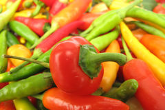 Chili peppers paprika full frame Royalty Free Stock Photography