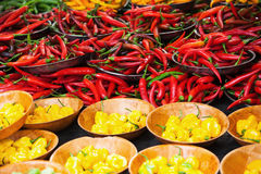 Chili peppers in variations Royalty Free Stock Image
