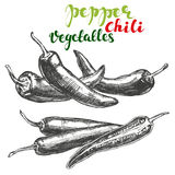 Chili peppers vegetable set hand drawn vector illustration realistic sketch. Chili peppers vegetable set hand drawn vector illustration sketch Stock Image