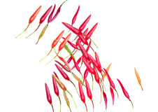Chili peppers watercolor background Royalty Free Stock Photos