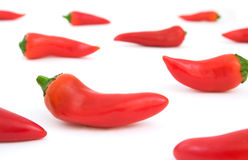 Chili Peppers on White Stock Photography