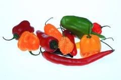Chili pieprz, Capsicum annuum Fotografia Royalty Free