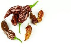 Chili pieprz na białym tle Przestrzeń pod tekstem Ekstra gorącego chili pieprzu Naga Bhut Jolokia czekolada Zdrowa pikantność Spr zdjęcie stock
