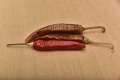 chili pieprz wysuszony gorący obraz royalty free