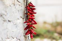 Chili pieprze Fotografia Stock
