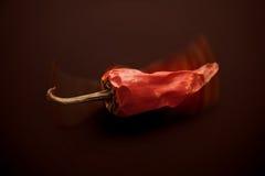 chili pieprzu czerwień Obraz Stock