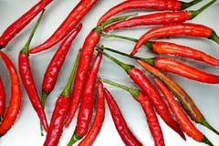 chili pieprzu czerwona woda Obraz Royalty Free