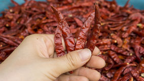 Chili pieprzu tło Fotografia Royalty Free