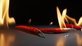 Chili pieprzy Spada puszek w zwolnionym tempie zdjęcie wideo