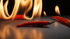 Chili pieprzy Spada puszek w zwolnionym tempie zbiory wideo