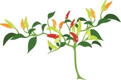 Chili Plant Vector Icon en Illustratie Royalty-vrije Stock Foto