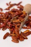 chili röda torkade varma peppar Royaltyfri Bild