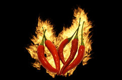 Chili. Red hot chili pepper in fire frame Royalty Free Stock Image