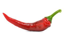 Chili red pepper Royalty Free Stock Photography