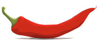 Chili Red (Vector Illustration, eps). Vector illustration of red chili on white background Stock Photo