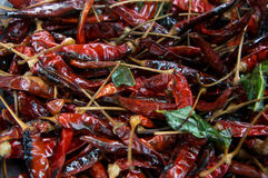 Chili spice spicy red dry cooked ingredients preparation concept Royalty Free Stock Photography