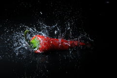 Chili splash. Red hot chili splashing into water on isolated black background Royalty Free Stock Images