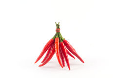 Chili spur pepper Stock Images
