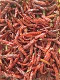chili suchy Obrazy Royalty Free