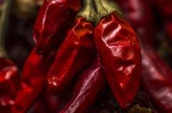 chili suszący Zdjęcie Royalty Free